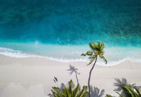 Nature, Blue, Sky, Tropics, Palm tree, Turquoise, Tree, Sea, Ocean, Arecales,