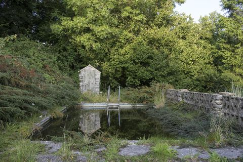 What's a Natural Swimming Pool, and Why Would You Want One?