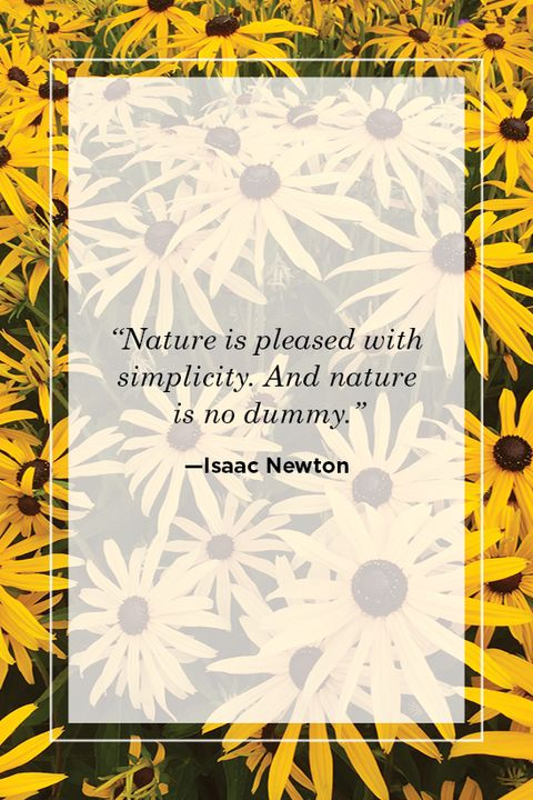 Isaac Newton nature quote