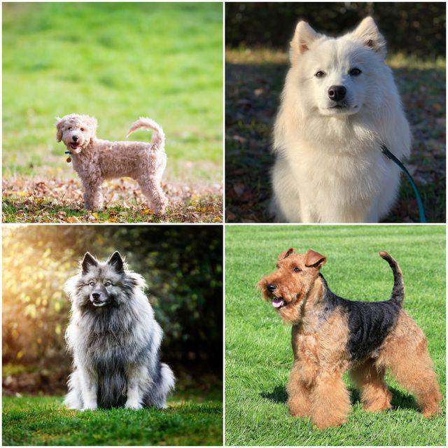 naughty dog breeds
