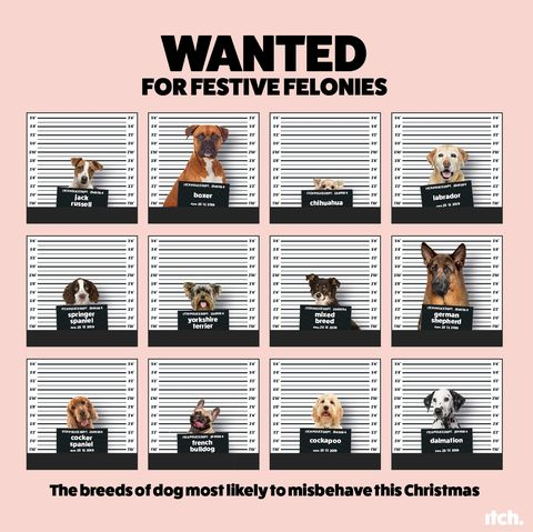 20 Christmas 'crimes' committed by our pets
