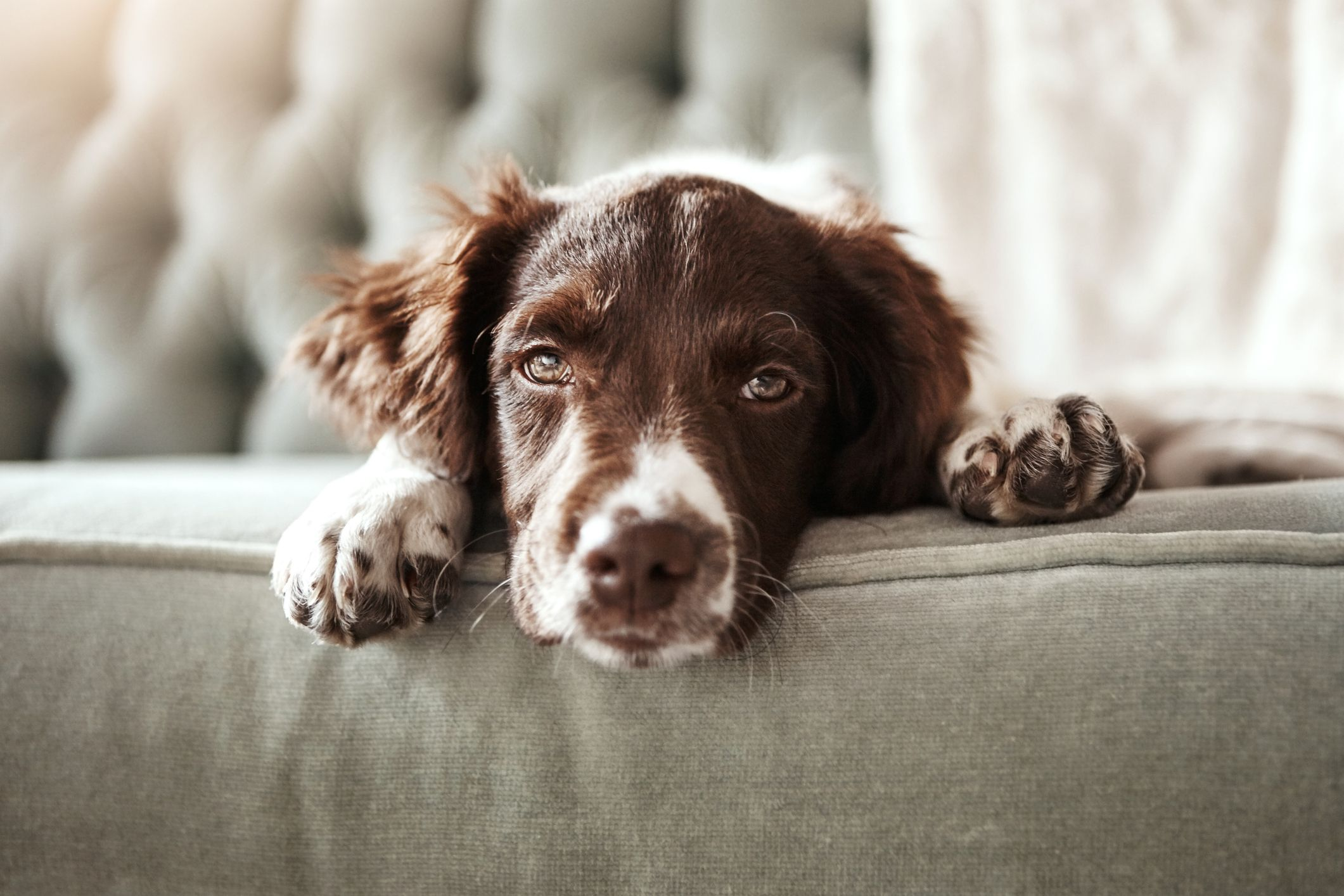 """Owners who use """"punishment-based"""" training on dogs may be making them depressed, study finds"""