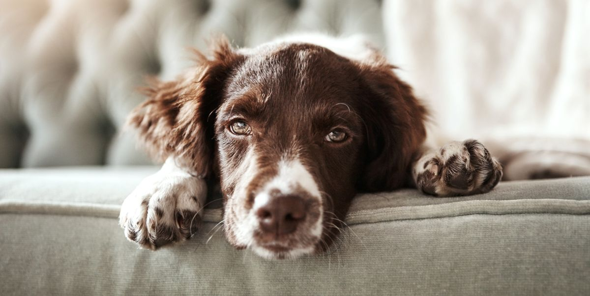 You should think again before shouting at your dog when it misbehaves
