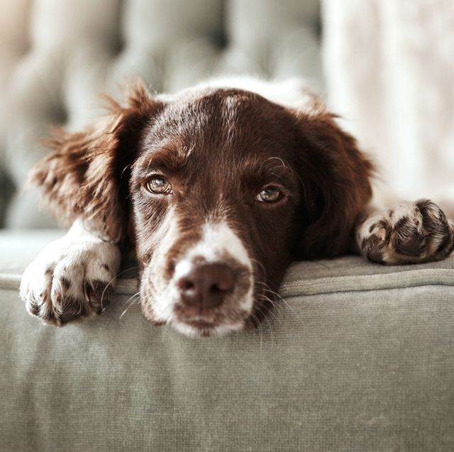 how to reduce your dog's stress levels this bonfire night