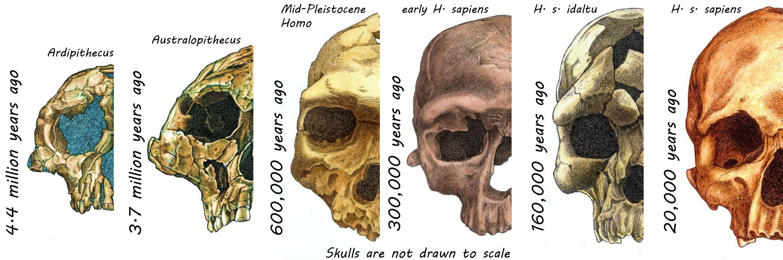 Esta es la razón por la cual tu rostro es tan diferente al de un neandertal