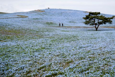 japan's hitachi seaside park shuts down to contain spread of the coronavirus