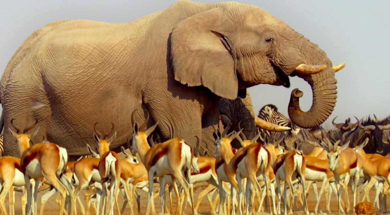 Netflix voegt adembenemende docu-serie Africa met  toe aan