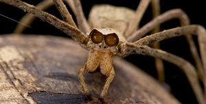 Netwerpende spin