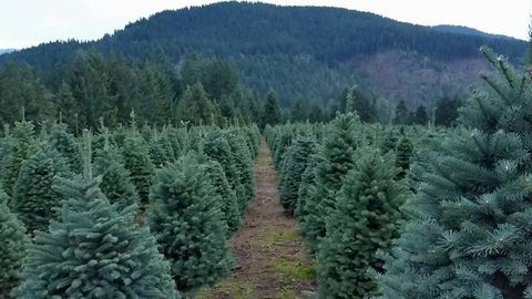 The Best Christmas Tree Farm In Every State In 2018 Best