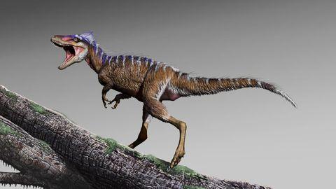 Dinosaur, Velociraptor, Tyrannosaurus, Terrestrial animal, Extinction, Animal figure, Organism, Wildlife, Troodon, Pachycephalosaurus,