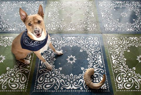 Dog, Canidae, Dog breed, Carnivore, Design, Fawn, Pattern, Companion dog, Illustration, Winter,