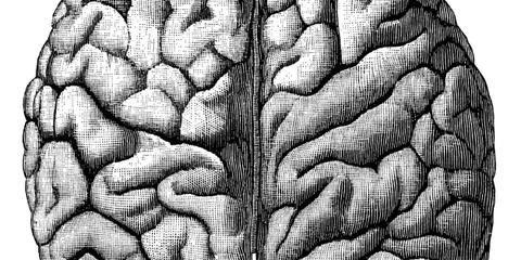 PCBs: brain chemistry