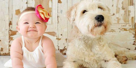 Dog breed, Vertebrate, Dog, Carnivore, Mammal, Pink, Baby & toddler clothing, Toy dog, Toddler, Companion dog,