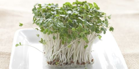 Ingredient, Produce, Sprouting, Alfalfa, Flowering plant, Bean sprouts, Broccoli sprouts, Vegetable, Alfalfa sprouts, Herb,