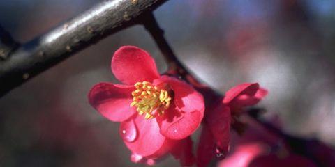 Petal, Flower, Red, Pink, Blossom, Botany, Flowering plant, Spring, Close-up, Wildflower,