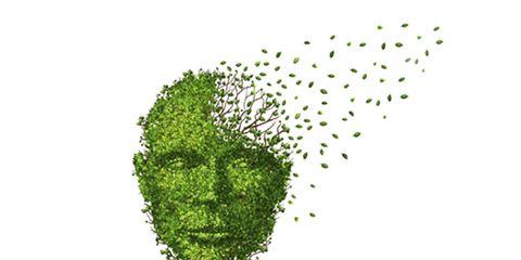 Leaf, Leaf vegetable, Graphics, Produce, Algae, Illustration, Drawing, Painting, Vegetable, Green algae,