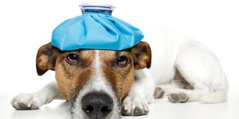 pet medication mistakes