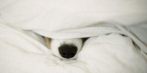 Comfort, Linens, Bedding, Bed sheet, Blanket, Duvet, Bedroom, Bed,