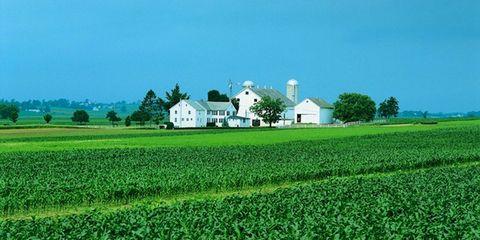 Nature, Farm, Property, Agriculture, Field, Landscape, Plain, Land lot, Plantation, Rural area,