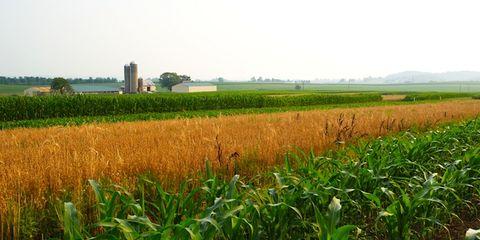 Agriculture, Farm, Plant, Field, Plantation, Plain, Land lot, Paddy field, Rural area, Crop,
