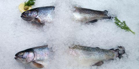 Vertebrate, Iris, Grey, Close-up, Marine biology, Fish, Fish, Silver, Fin, Snow,