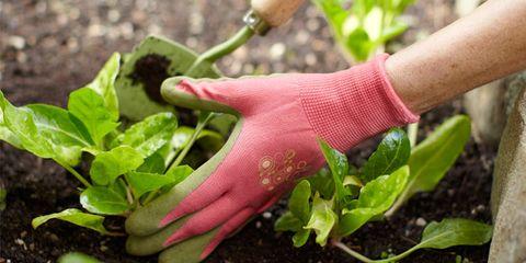 Finger, Leaf, Soil, Adaptation, Botany, Terrestrial plant, Herb, Annual plant, Thumb, Plant stem,