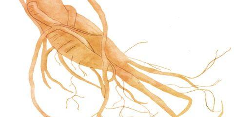 Tan, Root, Drawing, Illustration, Painting,