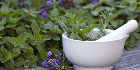 Leaf, Purple, Violet, Lavender, Serveware, Groundcover, Herb, Flowering plant, Annual plant, Fines herbes,