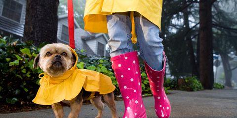 Dog breed, Dog clothes, Dog, Carnivore, Textile, Vertebrate, Dog supply, Mammal, Toy dog, Pink,