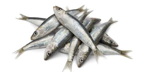 Vertebrate, White, Fish, Fish, Fin, Grey, Forage fish, Anchovy (food), Silver, Mackerel,