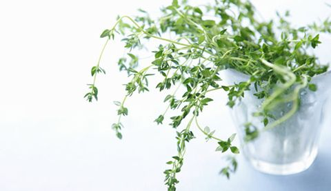 Thyme Relieves Cold Symptoms | Prevention