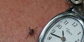 is a tick bite making you depressed?