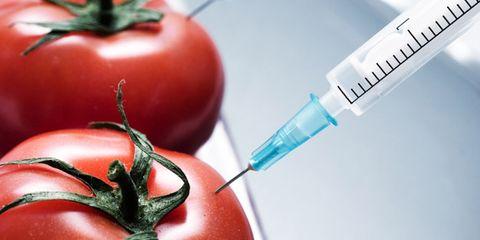 whole foods GMOs; tomato