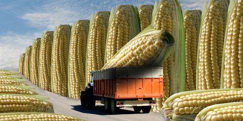 Automotive tire, Corn kernels, Ingredient, Corn, Vegan nutrition, Produce, Truck, Food grain, Sweet corn, Auto part,
