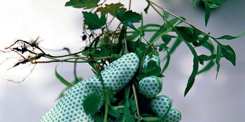 Branch, Green, Leaf, Twig, Pattern, Botany, Produce, Flowering plant, Plant stem, Fruit,