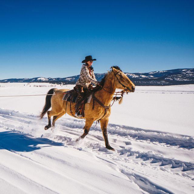 horse, snow, winter, skijoring, halter, recreation, rein, bridle, fun, animal sports,