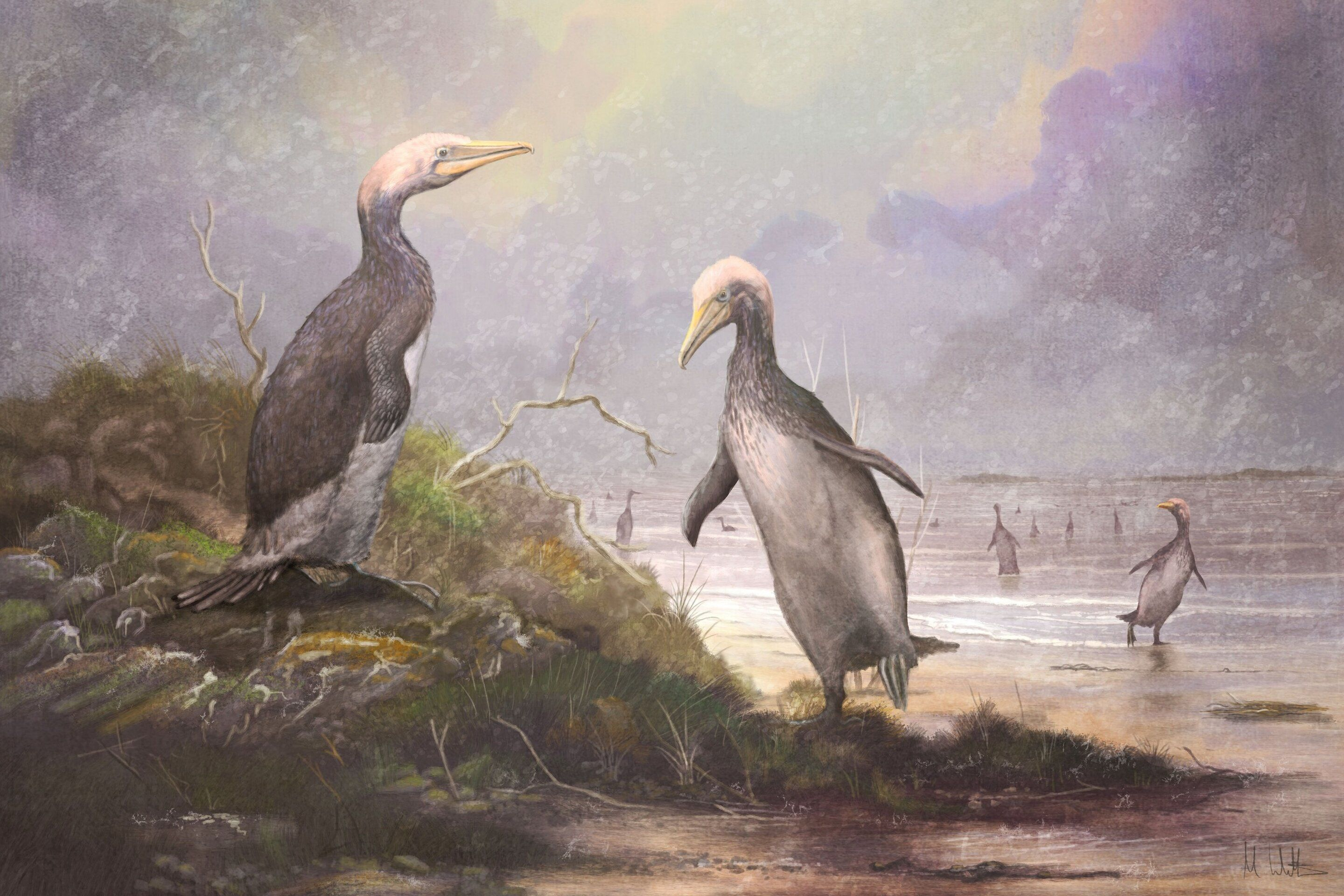 Monster Penguins Once Roamed New Zealand, and They Had an Evolutionary Twin
