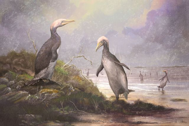 copepteryx, a type of plotopterid, which shared a striking resemblance to penguins