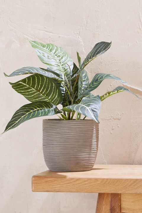 Next Home plant pot
