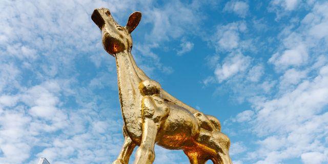 nederlands film festival gouden kalf