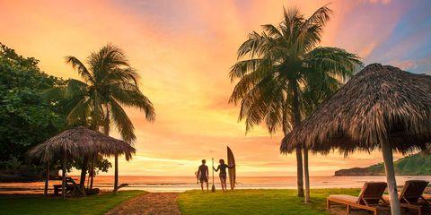 Nature, Sky, Tree, Palm tree, Tropics, Arecales, Sunset, Vacation, Attalea speciosa, Morning,