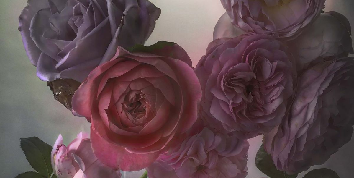 Nick Knight's painterly floral photographs are on display at Waddesdon Manor