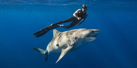 Fin, Marine biology, Fish, Lamniformes, Shark, Underwater, Cartilaginous fish, Common bottlenose dolphin, Great white shark, Marine mammal,