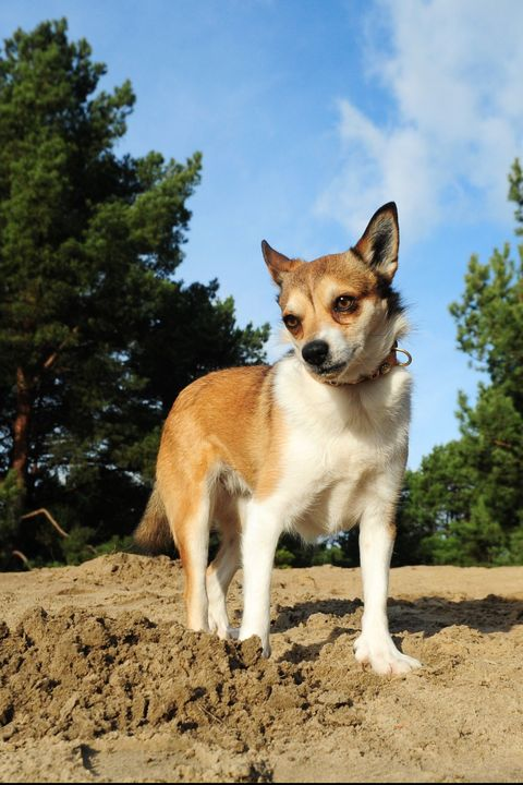 13 Rare Dog Breeds That Make Great Pets Rare Large Amp Small Dogs