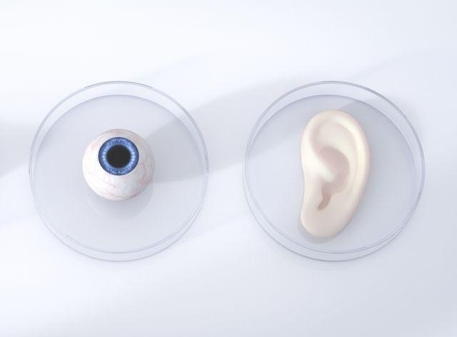 Nariz, ojos y oídos en placas de Petri, renderizado 3d