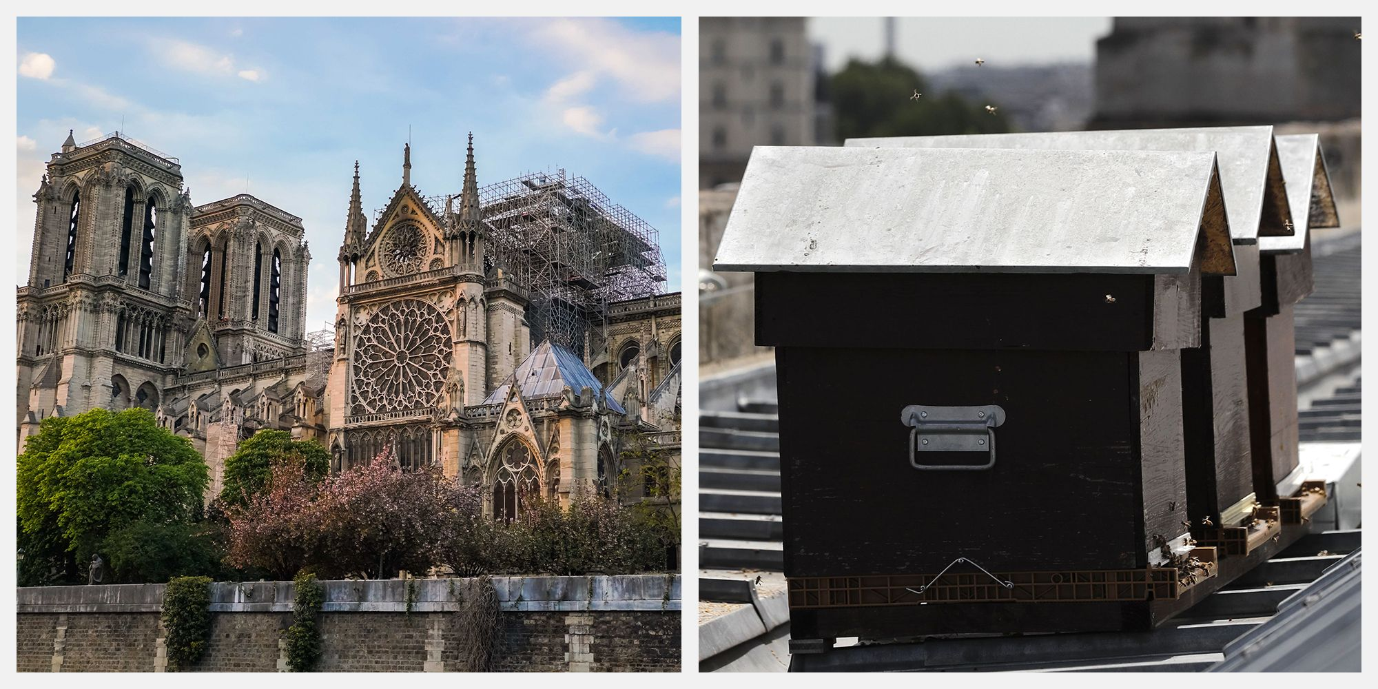 The Bees Kept on Notre-Dame's Roof Survived the Fire