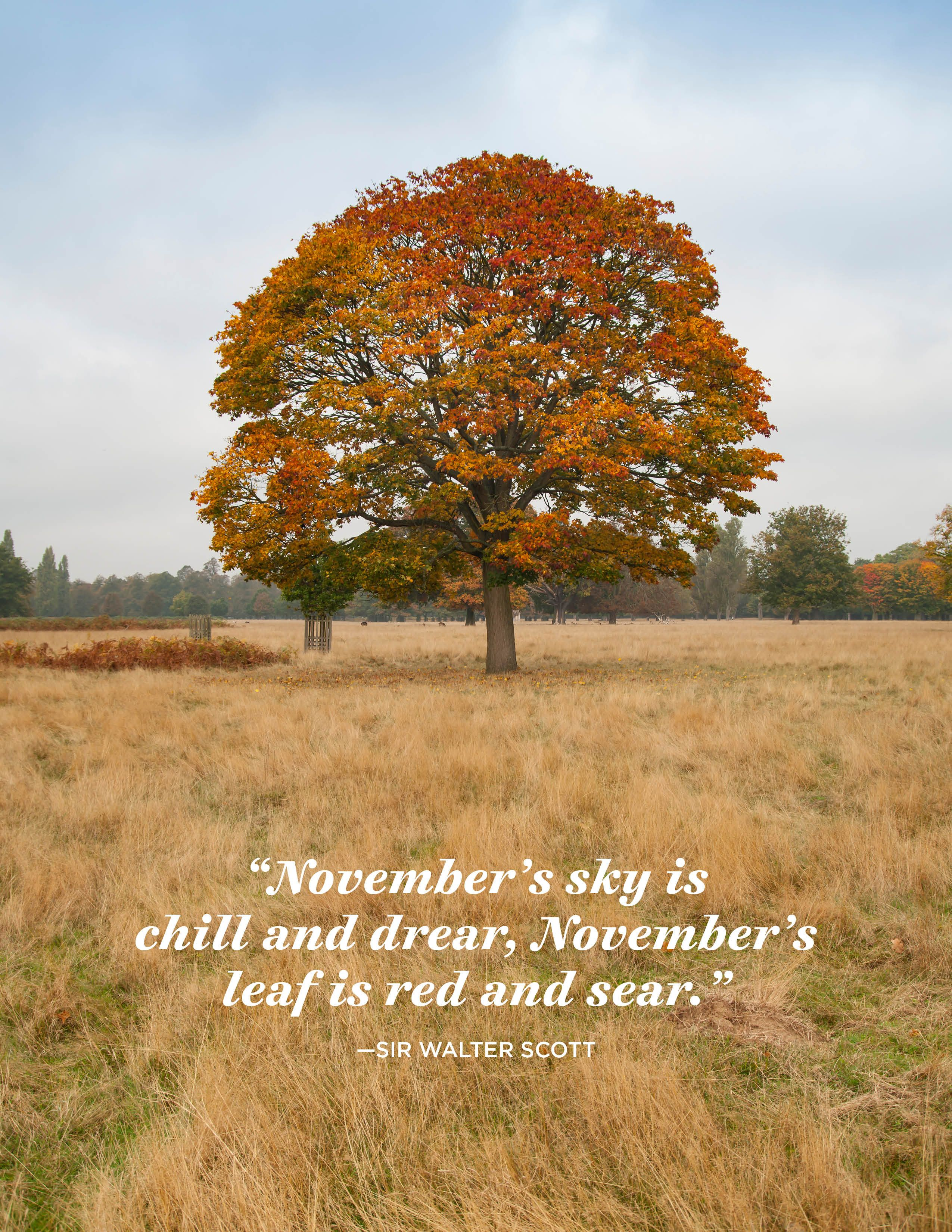 24 Inspiring November Quotes Famous Sayings And Quotes About November