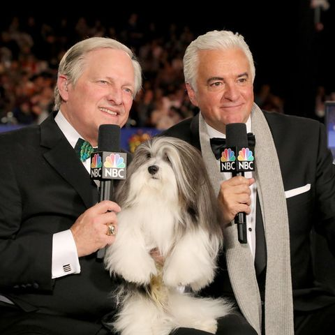 Watch Westminster Dog Show 2020.How To Watch The National Dog Show On Thanksgiving