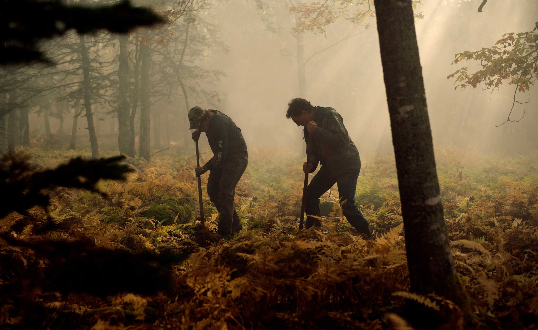 Money found pit island oak Scientists Solve