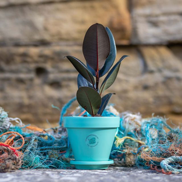 ocean plastic pots rhs chelsea sustainable garden product of the year award